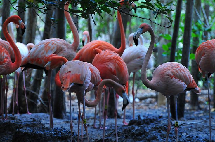 Island of Baru. Colombia   by Environmental Artist