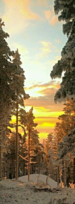 Golden Sunset in Lapland, Finland. - Photo by Virpula