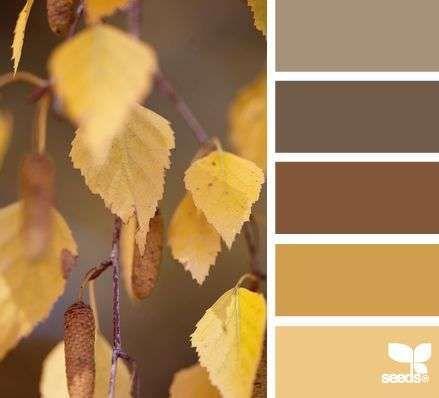 Kleurinspiratie herfstkleuren