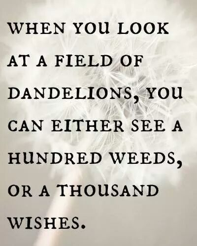 """Quotes:  """"When you look at a field of #dandelions, you can either see a hundred #weeds, or a thousand #wishes."""""""