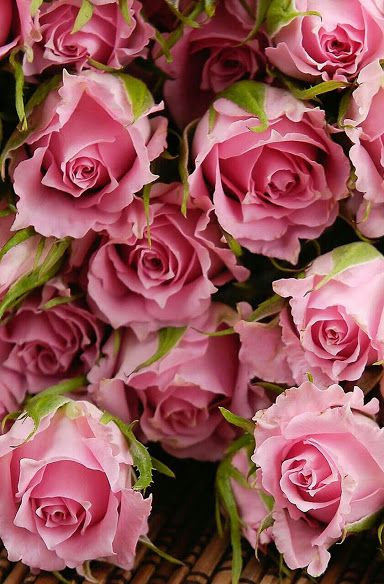 Love the ruffled petals on these pink roses