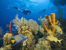 Belize Barrier Reef : Daily Escape : Travel Channel
