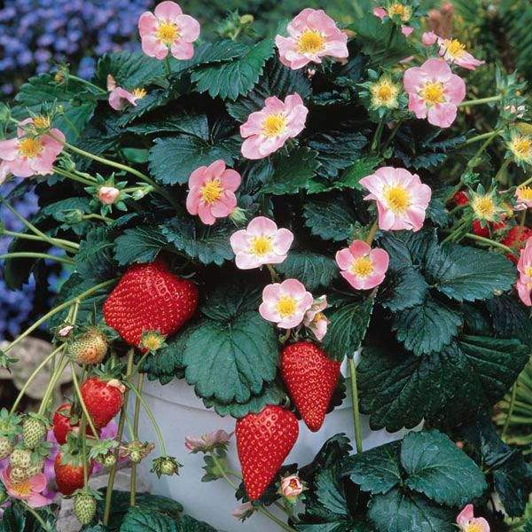 Find Rare Herbs And Seeds At Nichols Garden Nursery A Complete Selection Of Plants Supplies