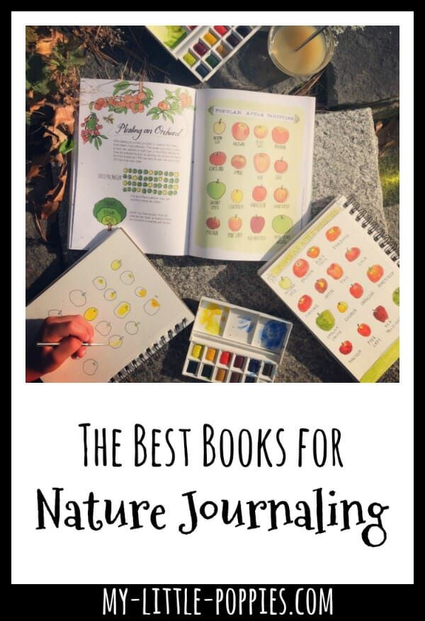 The Best Nature Journaling Books for Creativity and Inspiration