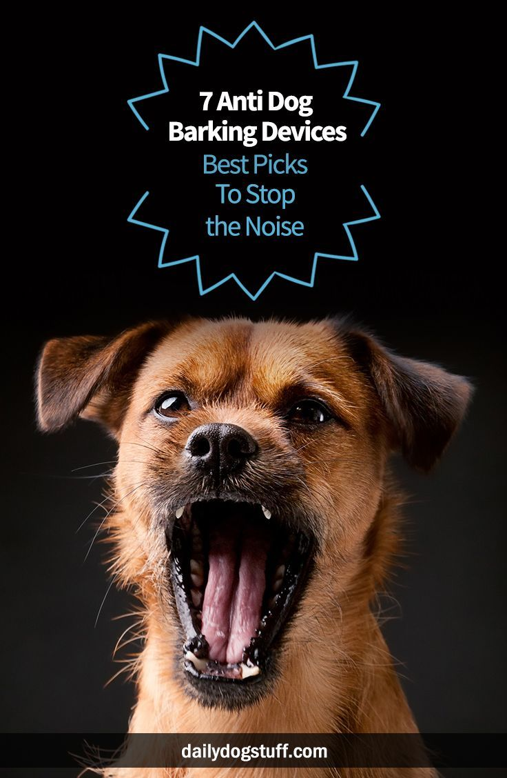 7 Anti Dog Barking Devices Best Picks To Stop The Noise Dog