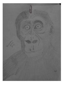 An ape! boo