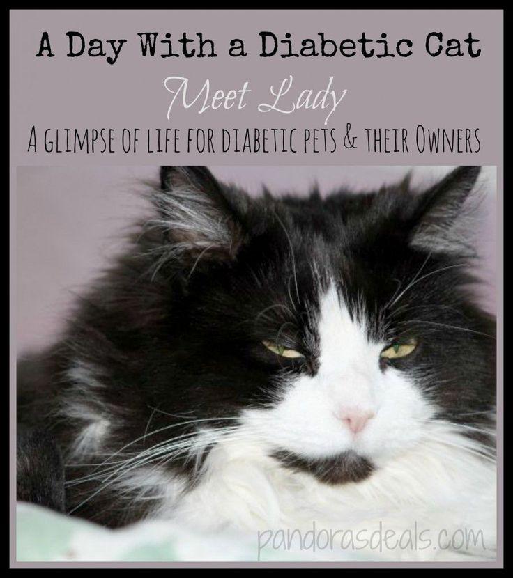 Best 25 Diabetes Cat Ideas On Pinterest Diabetes In