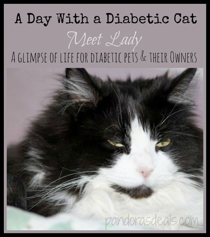 Day With a Diabetic Cat: What life is like for diabetic pets and their owners. #pets Read more here: http://pandorasdeals.com/a-day-with-a-diabetic-cat/