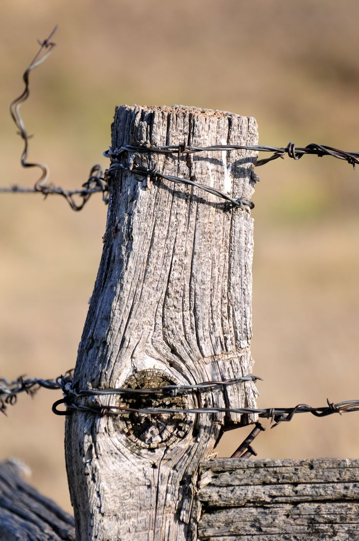 old fence post with barbed wire