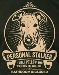 Personal Stalker: A new way to define your dog's love for you!