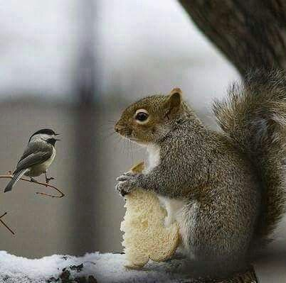 Bird and squirrel having a nice chat over who gets the bread.