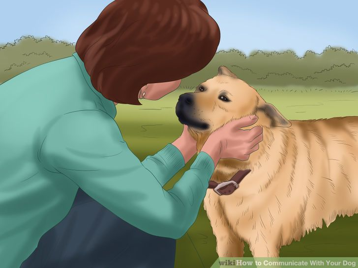 How to Communicate With Your Dog (with Pictures) - wikiHow
