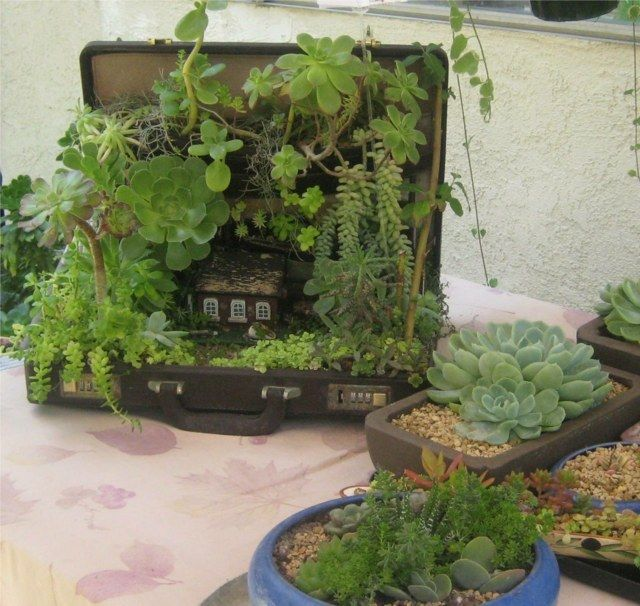44 best MiniJardin images on Pinterest Succulents, Gardening and