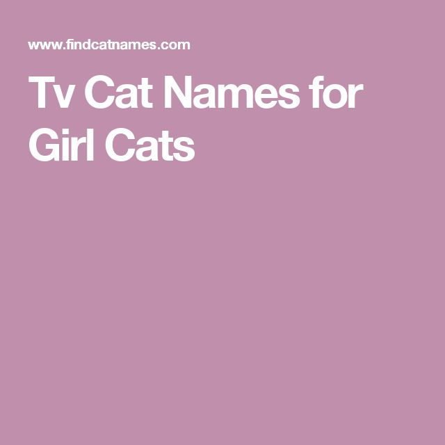 Tv Cat Names for Girl Cats