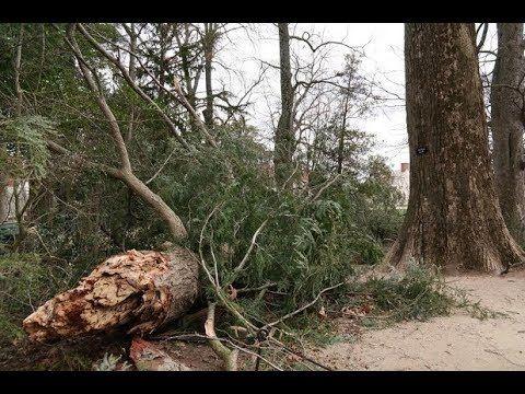 George Washington's Trees Falling!  Isaiah 10 Judgment Coming! - YouTube