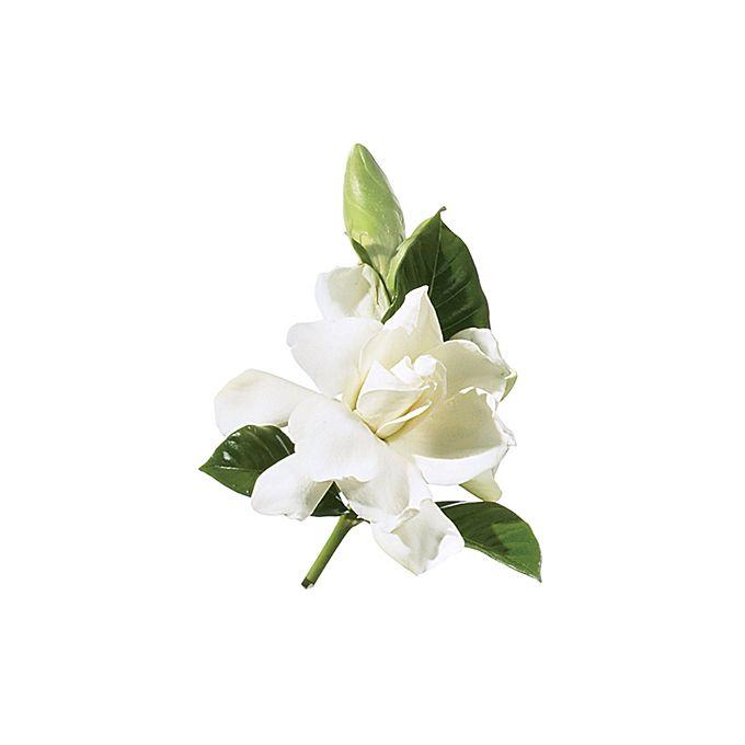 Brides.com: A Glossary of Wedding Flowers by Color. Gardenia. Work this blossom into a chignon for a retro-glam touch.  Browse more gardenia wedding flower ideas.