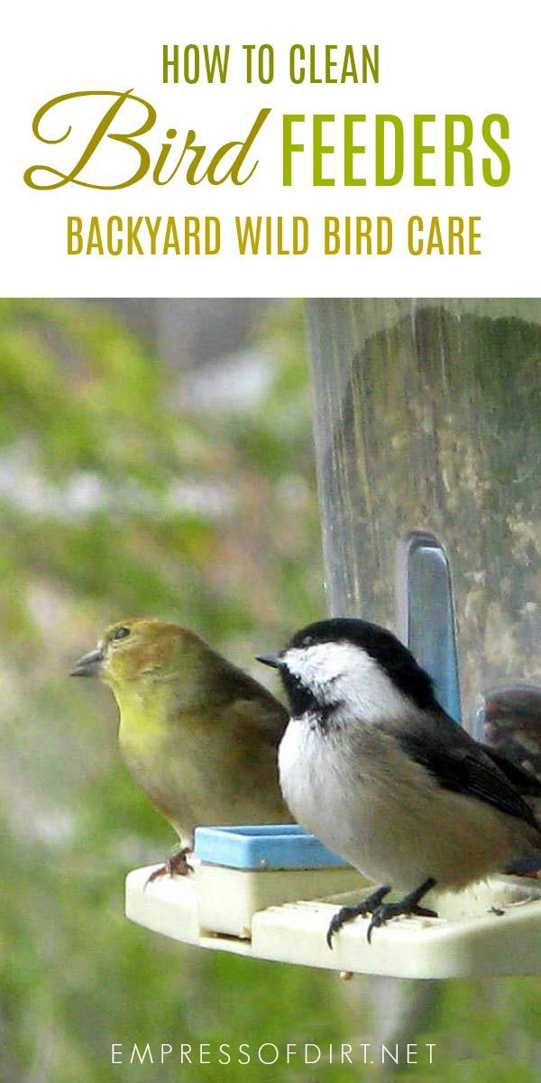 Clean Your Bird Feeders On A Regular Basis To Avoid The Spread Of Disease Amongst Wild Birds