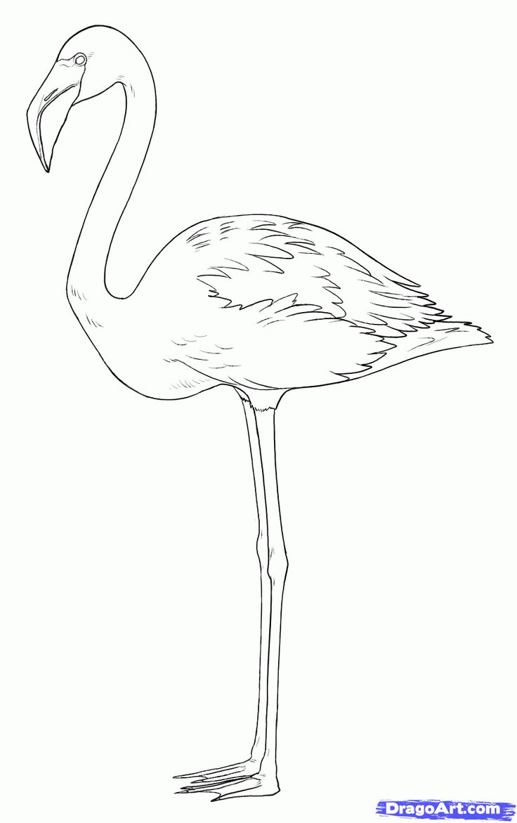 How To Draw Flamingos Step 7 How To Draw In 2019