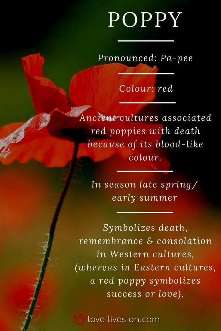 Pin By Giuliana Gado On Tattoos In 2020 Poppy Flower Meaning Flower Meanings Funeral Flowers