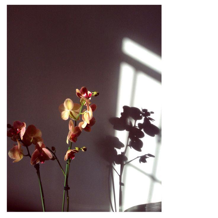 Flower  || sunday morning || GaiaFappani