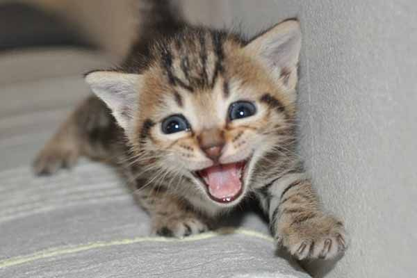 Why Do Cats Meow At Night? – 10 Reasons They Do This.....  See Here At: http://magazine8.com/why-do-cats-meow-at-night/