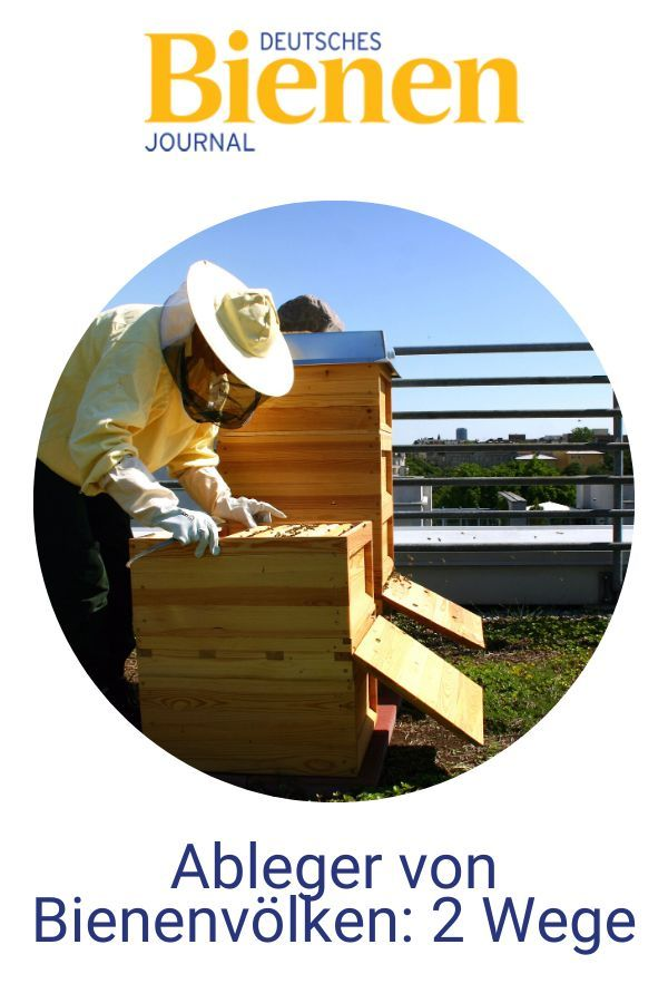 Ableger Von Bienenvolkern 2 Wege Bienen Imkerei Fur Anfanger Bienenpflanzen
