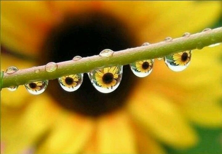 Can't help loving this picture if you like rain drops and sunflower, which I do.