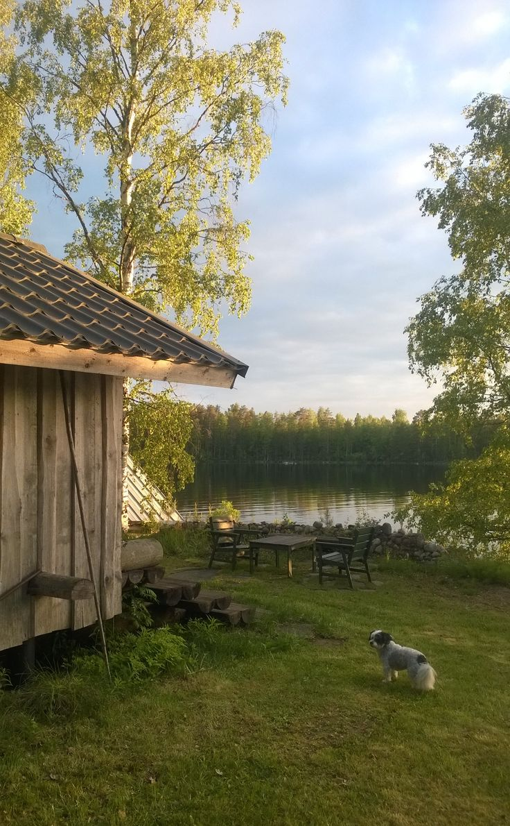 Mid summer in Finland. Tha light makes green color sparkling. I love that light green!!