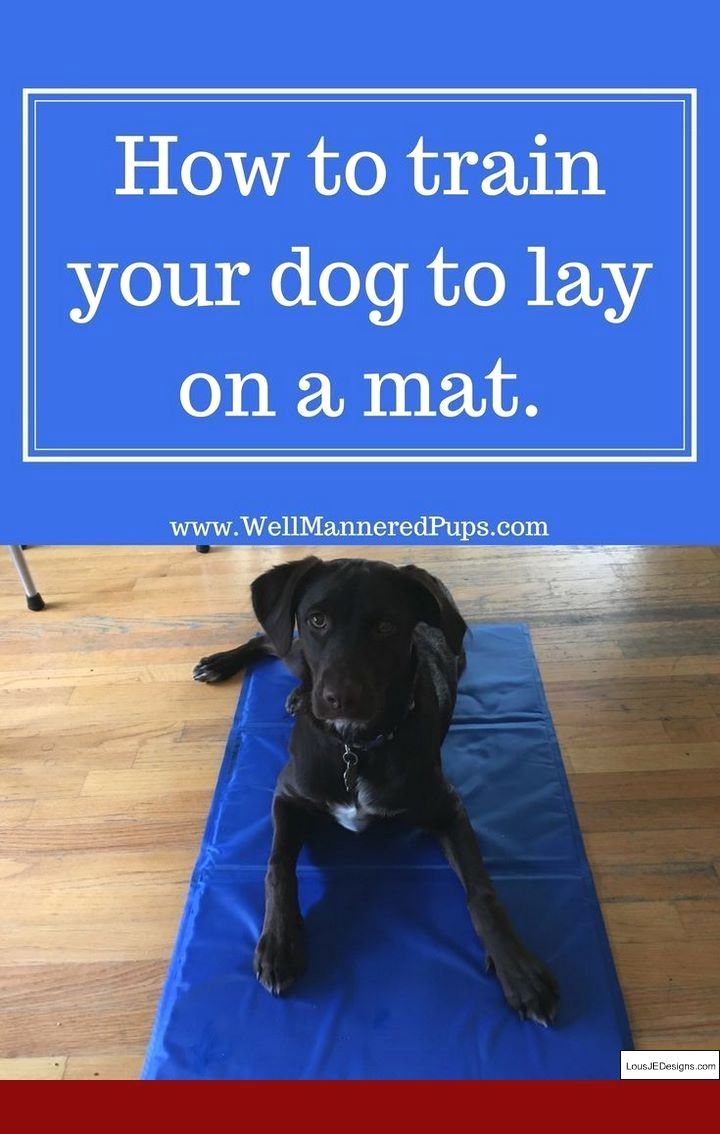 How To Train Your Dog For Recall And Pics Of How To Train A Little