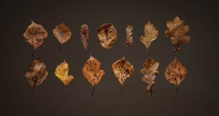 Ground leaf, Rens . on ArtStation at https://www.artstation.com/artwork/1ldwe