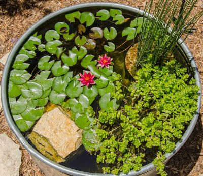 Find This Pin And More On DIY Stock Tank Pond By Ericastrahon.