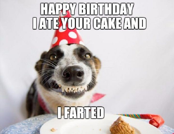 Funny Birthday Captions For Instagram Funny Happy Birthday Wishes Birthday Wishes Funny Funny Happy Birthday Pictures