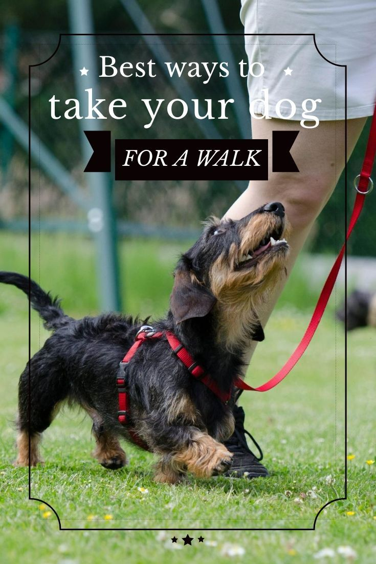 Best Ways To Take Your Dog Out For Awalk Dog Clicker Training