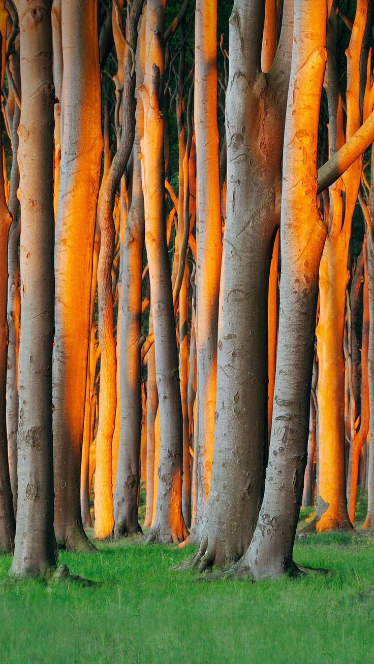 Pin by Heidi McCallum on TREES/PLANTS Trees to plant