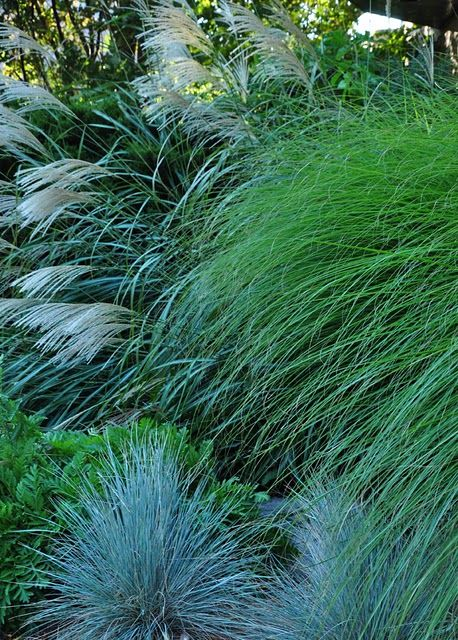 miscanthus and fescue... Grasses make such a great addition to a coastal garden. They tolerate salt and wind well and fit in naturally with the surrounding landscape.
