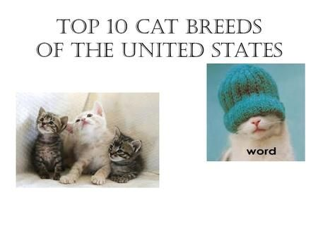 Top 10 Cat Breeds of the United States. Persian Affectionate & loyal Need groomed every day #1 breed since 1871 Flat face with round eyes.>