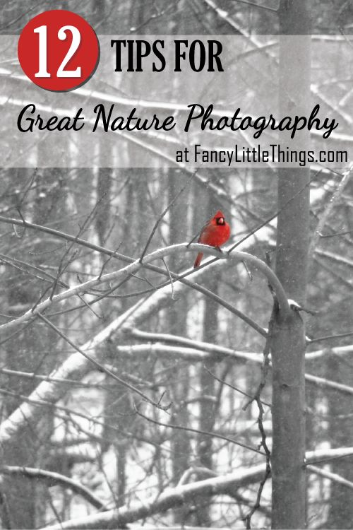 12 Tips for Great Nature Photos
