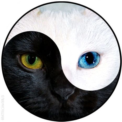 yin yang cats - Google Search
