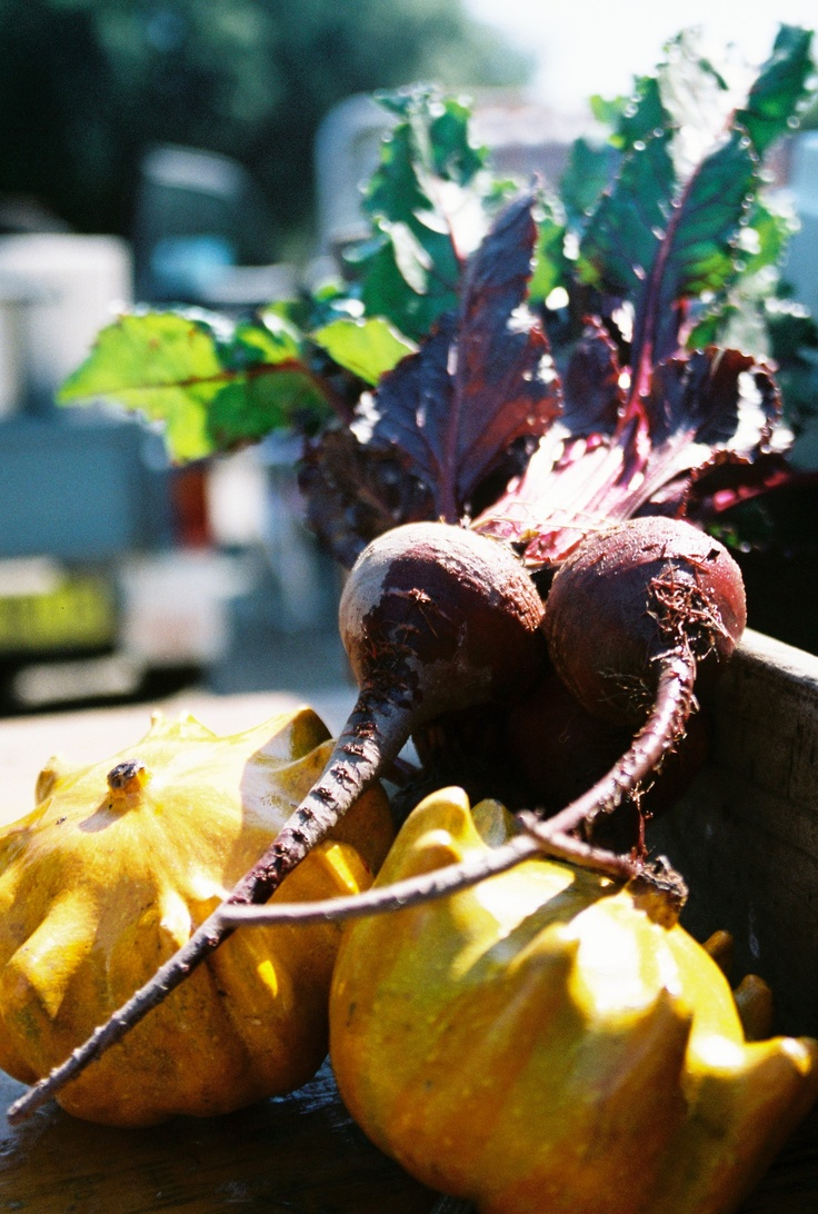 Beetroot & Squash - Farmers' Market Wodonga, Victoria