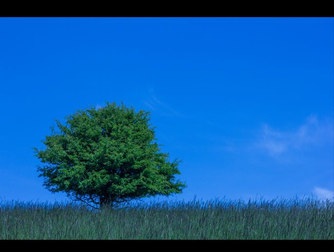 A lone tree on a summer's landscape in SW England