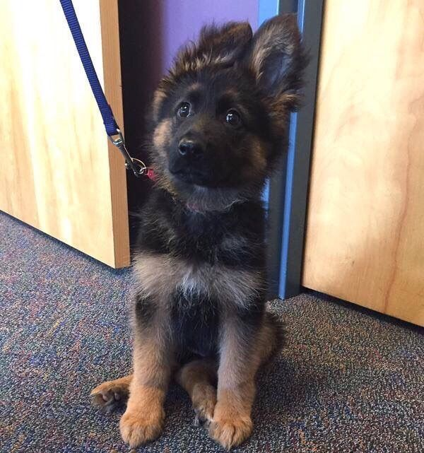 New recruit at the local police station
