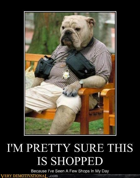 :): American Bulldogs, Funny Dogs, Old Dogs, Dresses Up, Dogs Day, Central Parks, Funny Stuff, Grumpy Cat, Bull Dogs