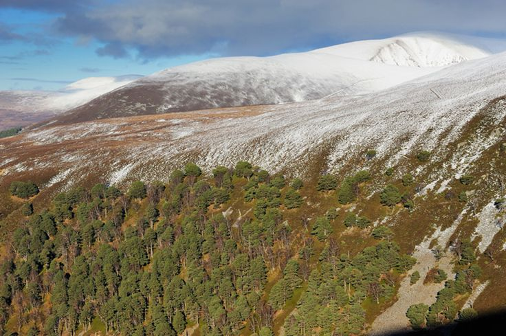 Scots pine woodland and snow capped hills in Glenfeshie, Cairngorms National Park.