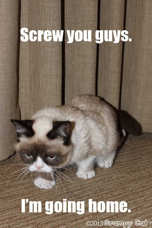 Image result for grumpy cat screw you