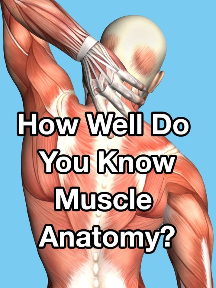 Only A True Muscle Expert Can Pass This Quiz | Anatomy and ...