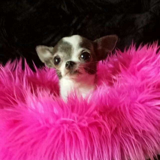 Miss Jade - I love this little baby!  She has her own Facebook page - adorable!