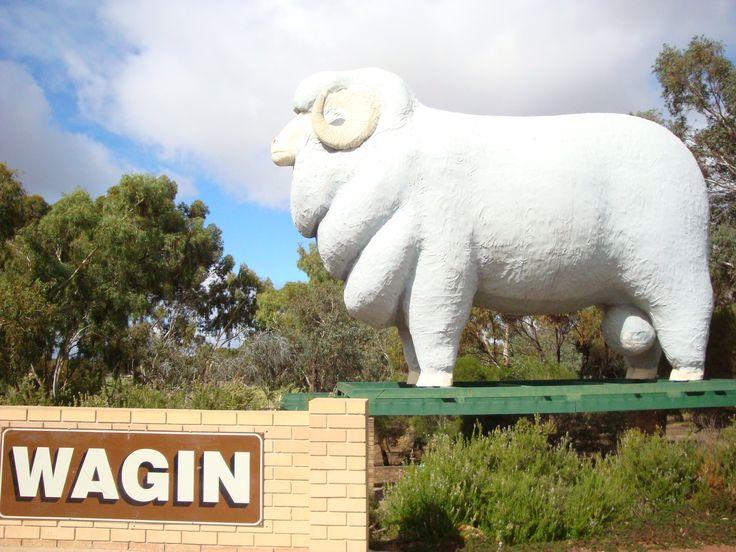 Giant Ram, Wagin, WA