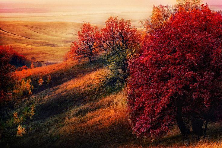 The red tree by Maratti Z on 500px