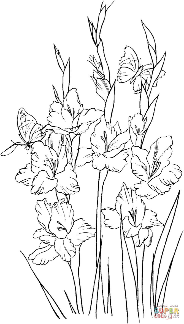 Flower garden coloring pages printable - Gladiolus 2 Coloring Page From Gladioluses Category Select From 24848 Printable Crafts Of Cartoons Nature Animals Bible And Many More
