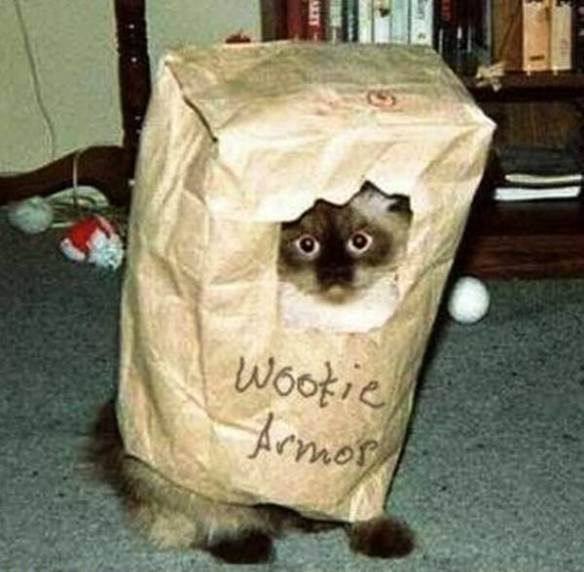 15 hilarious cats in costumes | Kitty Bloger